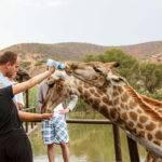 Giraffe Experience Oudtshoorn