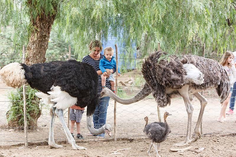 OstrichShow Farm